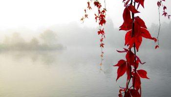 Serenity Enchanted