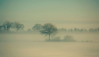 Winter Fog by Daniel Vesterskov