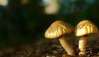 Backyard Mushroom