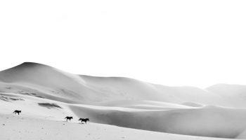 Sand & horses by M. Siewert