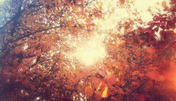 Joel Heaps' Sunny Autumn