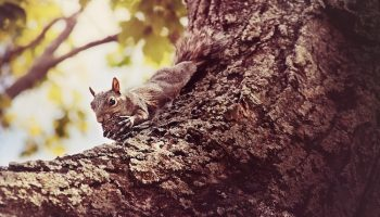 squirrel with nut wallpaper