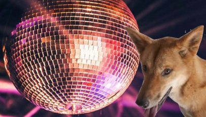 ubuntu 19.04 is named the disco dingo